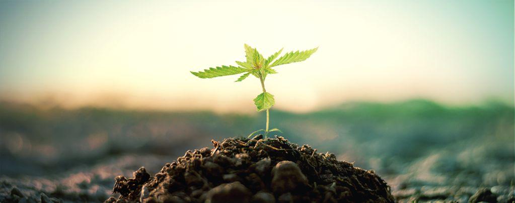 Compost Para Cultivar Marihuana