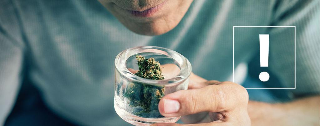 Impurezas De Los Cogollos De Marihuana