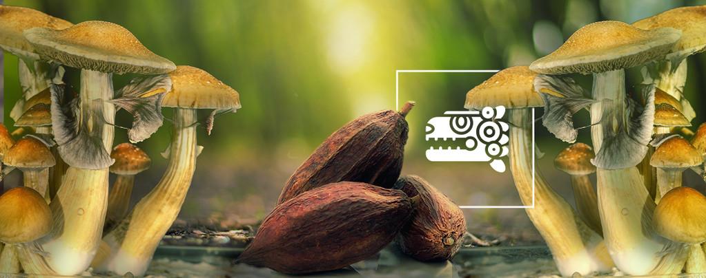 El Combinado Azteca: Setas y Cacao