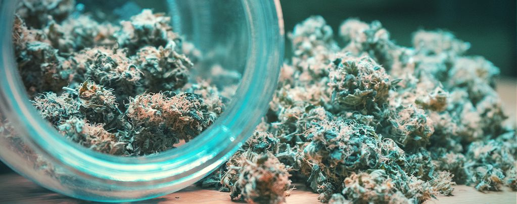 Secar Y Curar Cannabis