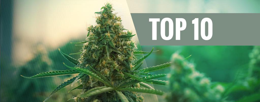 Nuestro Top 10 de las Mejores Cepas de Cannabis