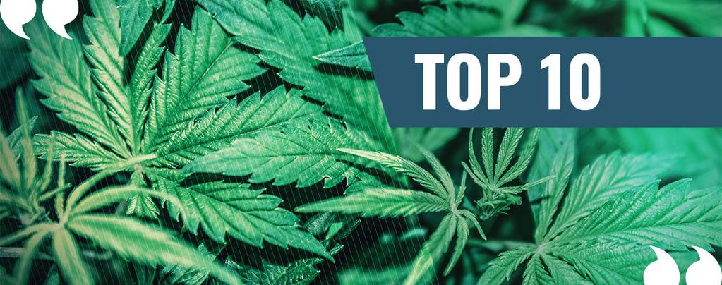 Nuestro Top 10 de Citas sobre la Marihuana
