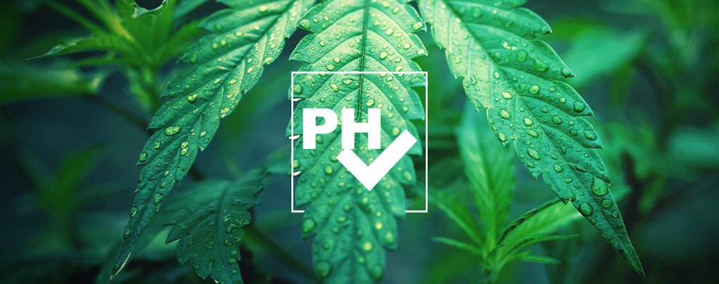 Ajustar Valor pH Cultivar Cannabis