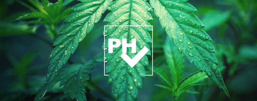 La Importancia del Nivel de pH