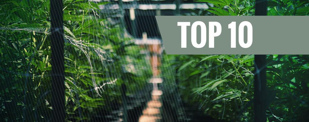 Nuestro Top 10 de Cepas Automáticas de Exterior