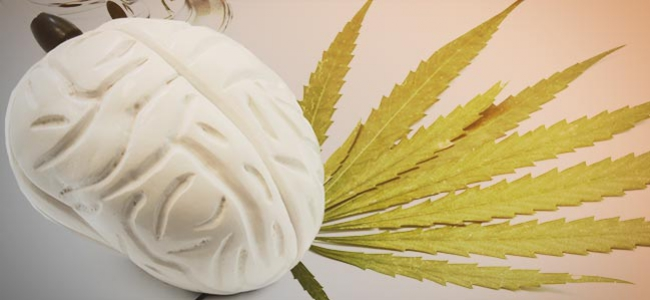 Efectos Cannabis Cerebro