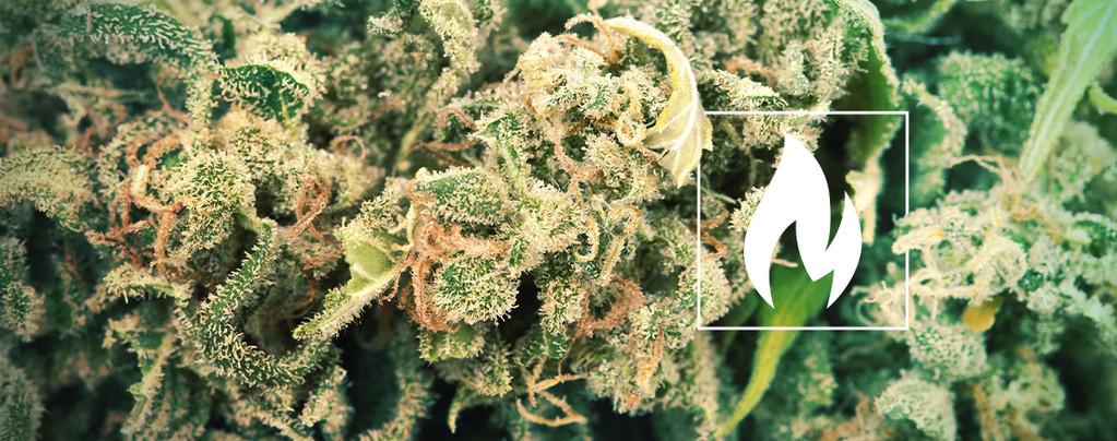 Descarboxilar Cannabis