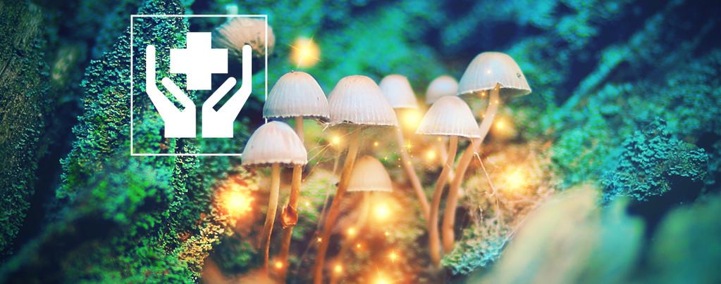 Top 10 Setas Alucinógenas