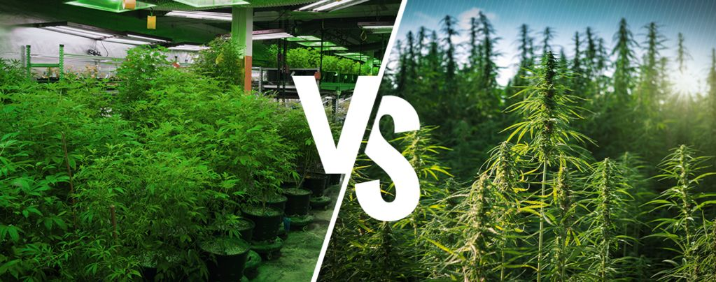 Cannabis Interior vs. Exterior