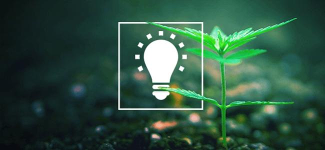 Cultivar Una Hierba Mejor
