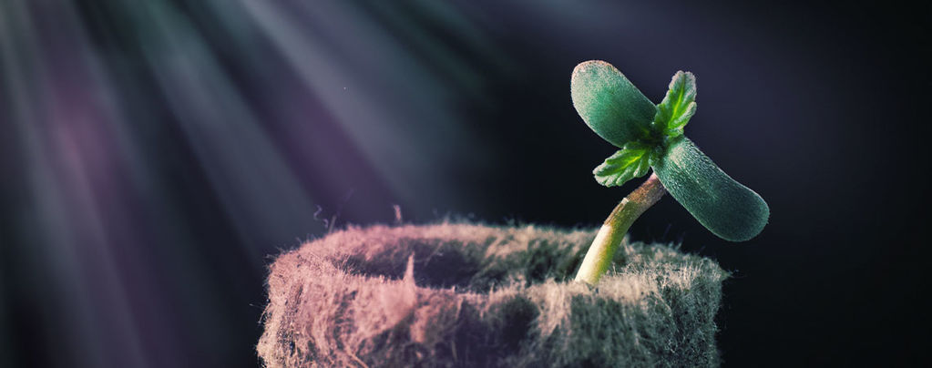 Consejo de Cultivo: El Espectro Luminoso