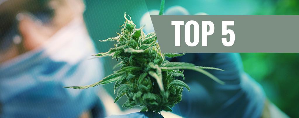 Top 5 de Variedades de CBD para el 2016