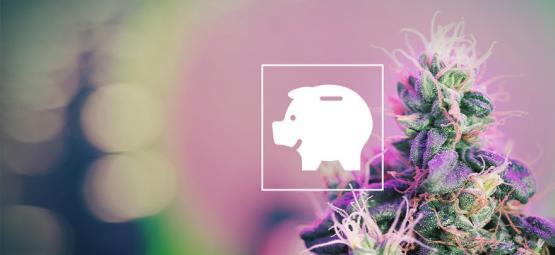 Cómo cultivar marihuana con un presupuesto limitado