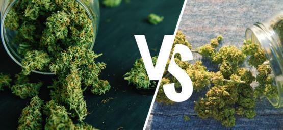 Marihuana De Interior Vs. De Exterior: ¿Cuál Es Mejor?