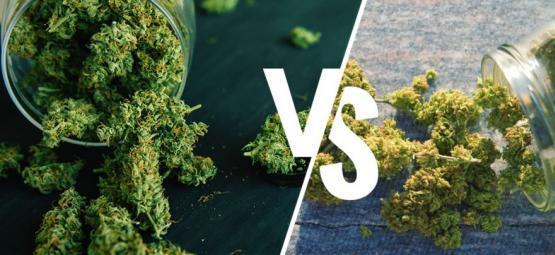Marihuana De Interior Vs De Exterior: ¿Cuál Es Mejor?