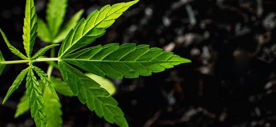 Ácidos Húmicos y Ácidos Fúlvicos: Qué Son Y Cómo Se Usan