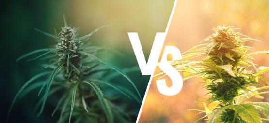 ¿En Qué Se Diferencian El Cáñamo Y El Cannabis?