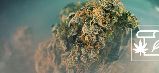 ¿Qué Es La Marihuana Skunk?