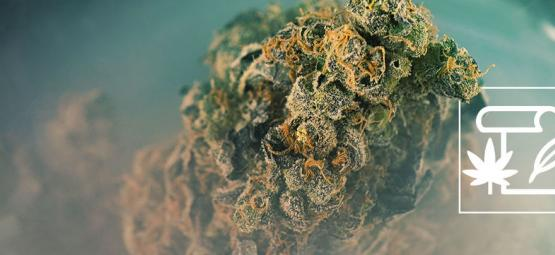 Origen De La Marihuana Skunk Y Las 3 Mejores Cepas