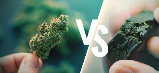 La Diferencia Entre La Marihuana Y El Hachís