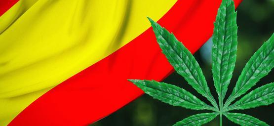 Las reformas avanzan: Bilbao decidida a regular los clubes de cannabis