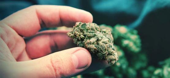 Cogollos popcorn de cannabis: qué son y cómo evitarlos