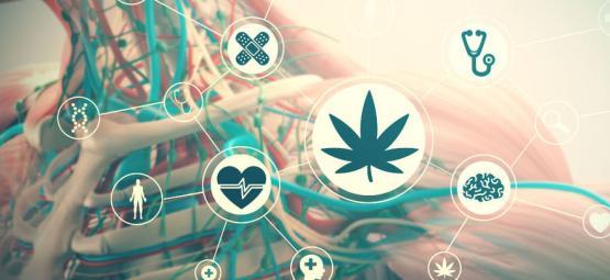 Los Efectos Del Consumo De Marihuana Sobre Tu Cuerpo