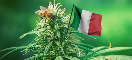 Las Mejores Variedades De Cannabis De Exterior Para Cultivar En Italia