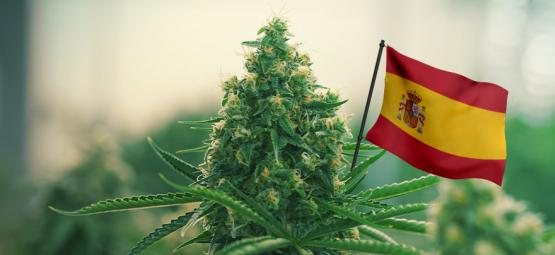 Las Mejores Cepas De Cannabis Para Cultivar En Exterior En España