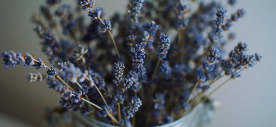 Las Mejores Hierbas Para Mezclar Con Cannabis