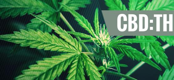 Beneficios De Los Distintos Ratios De CBD:THC