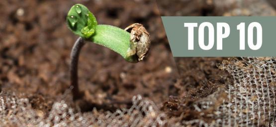 Variedades Fáciles de Cultivar (Para Principiantes)