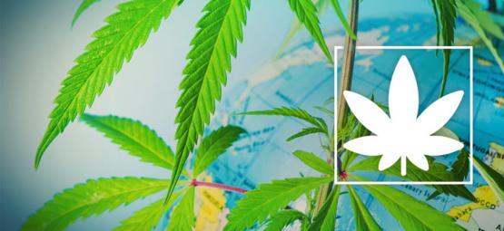 Dónde Fumar Marihuana En Europa De Forma Legal