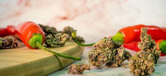 Las Sorprendentes Ventajas De Combinar Marihuana Y Guindilla