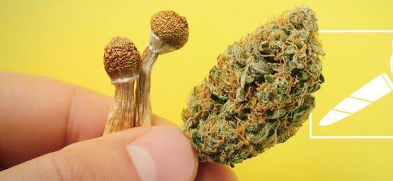 ¿Deberías Plantearte Fumar Setas Alucinógenas?