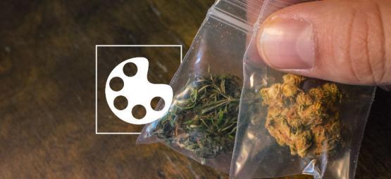 Los Diferentes Colores De La Marihuana Y Qué Significan