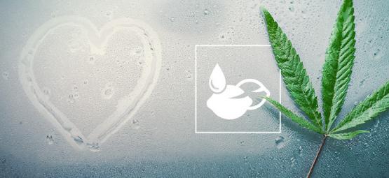 Las Mejores Semillas De Cannabis Para Climas Húmedos