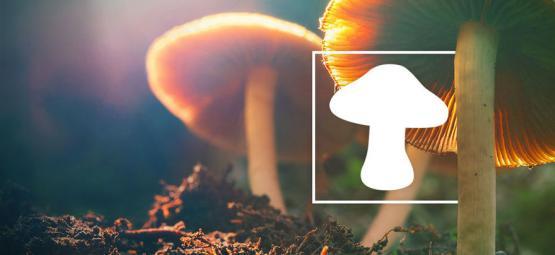 Cómo Identificar Diferentes Tipos De Setas Alucinógenas