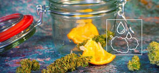 Cómo Rehidratar Los Cogollos De Marihuana Resecos