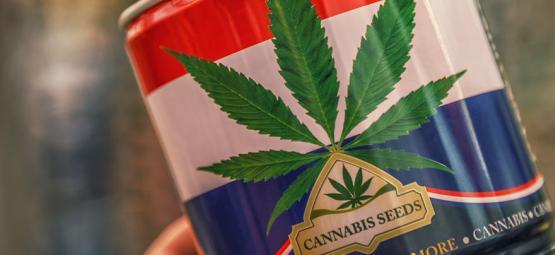 ¡Nederwiet! Todo Sobre La Marihuana Holandesa Y Sus 3 Mejores Variedades