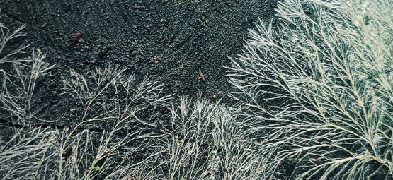 ¿En Qué Consiste El Micelio En El Cultivo De Setas Mágicas?