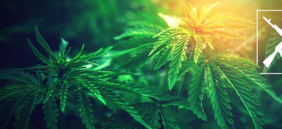 Top 3 De Cepas De Marihuana Ak-47: Efectos Y Datos De Cultivo