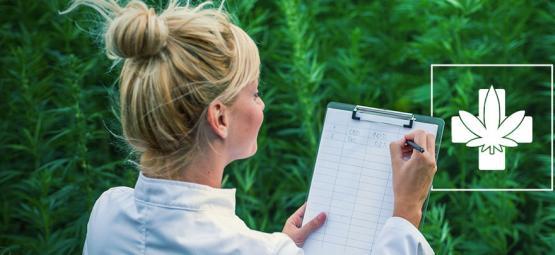 Cómo Elegir La Cepa Medicinal Adecuada Para Ti