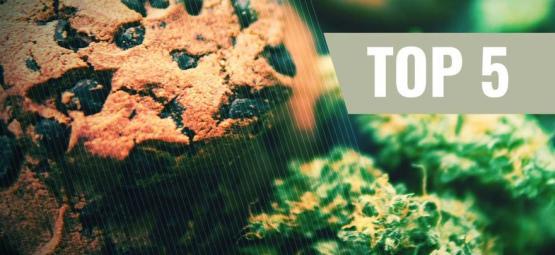 Las 5 Mejores Recetas De Galletas De Marihuana