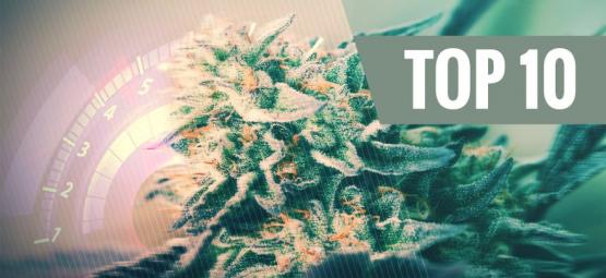 Top 10 De Variedades De Cannabis Rápidas Para El 2018
