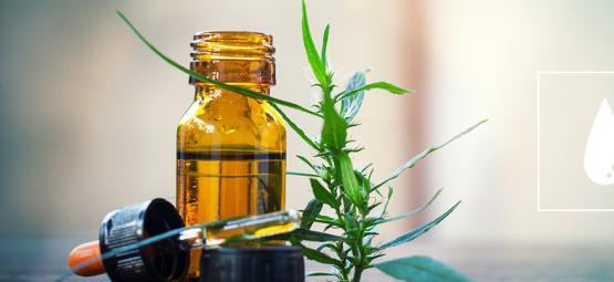 Guía Completa Para Elaborar Aceite De Cannabis Con CO₂