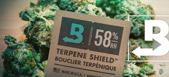 Cómo Mantener Tu Marihuana Súper Fresca Con Boveda