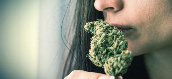 Cómo Eliminar El Olor A Marihuana