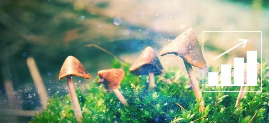 Cultiva Setas Mágicas Con Nuestro Kit De Cultivo Exterior