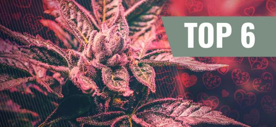 Las 6 Variedades De Cannabis Para El Día De San Valentín